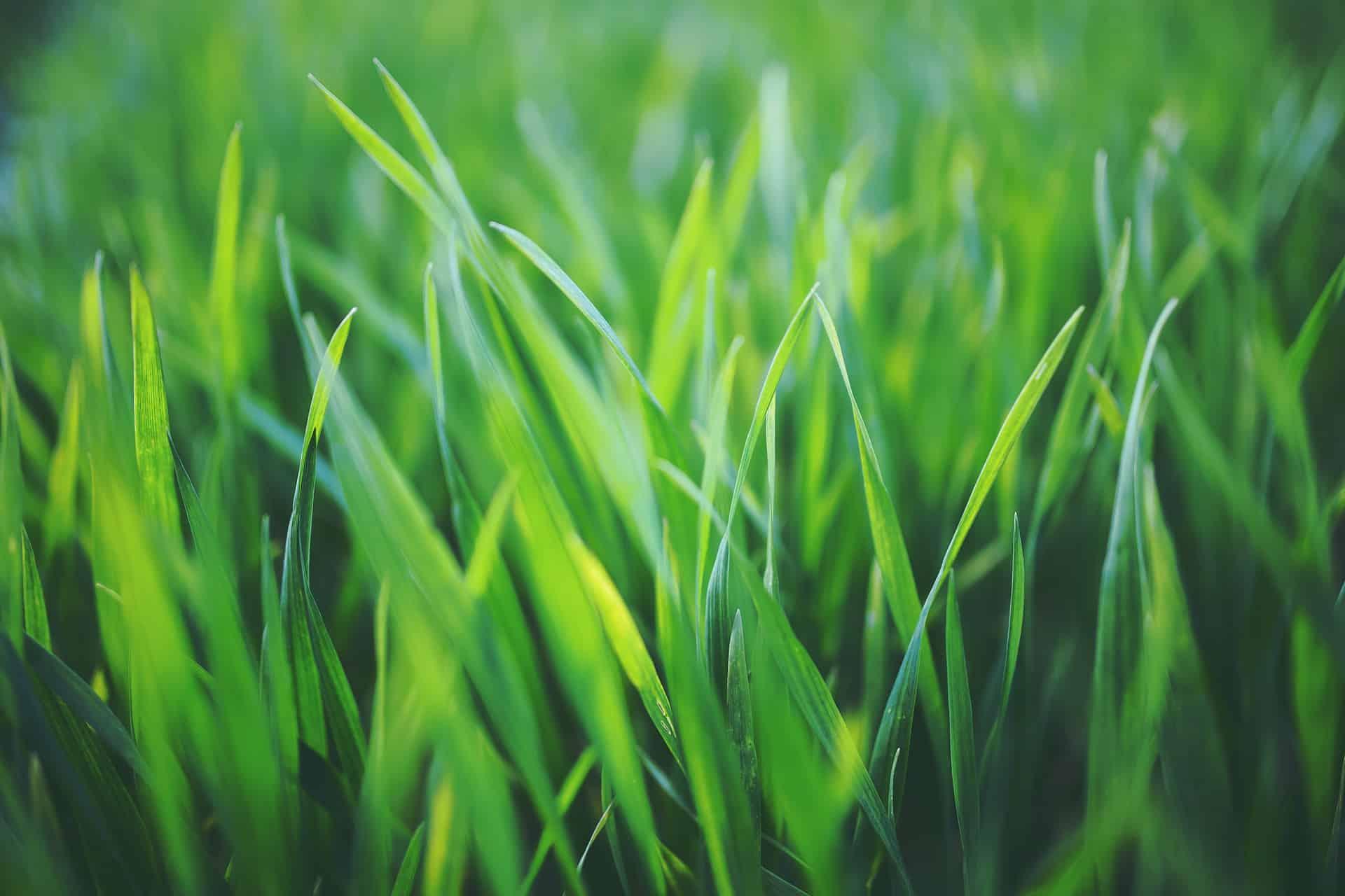 Tjäna pengar på att klippa gräs